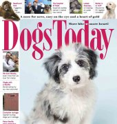Dogs Today - November 2015 - Pet Subjects Ltd.