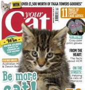 Your Cat - February 2016 - BPG Media