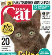 Your Cat - March 2015 - BPG Media