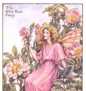 Wild Rose Fairy - PC17 - DMC